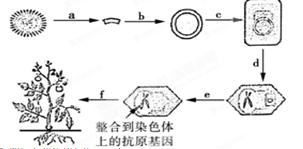 重组人白介素-6活性