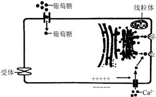 重组人活化素A活性