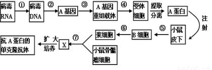 重组人类转化生长因子β-2