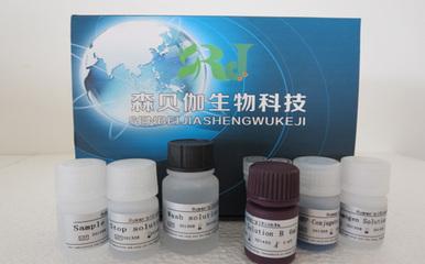 抗人白介素12p40 (IgG)