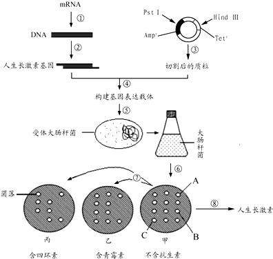 Calpain-1 Substrate II, Fluorogenic