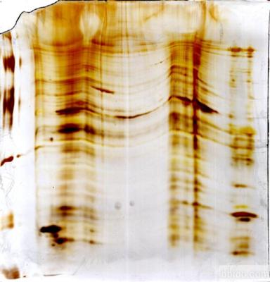 髓鞘蛋白脂质蛋白多肽PLP(139-151)