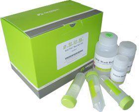 人EGFR基因突变检测试剂盒(PCR荧光法)