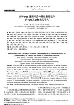 pTRE3G-Luc载体 四环素诱导载体系统