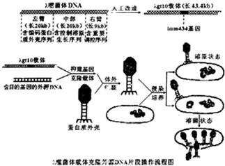pBluescript II SK(+)克隆载体