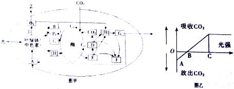 pBACgus-3 DNA