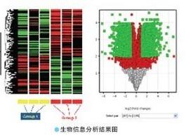 Western Blot免疫印迹检测