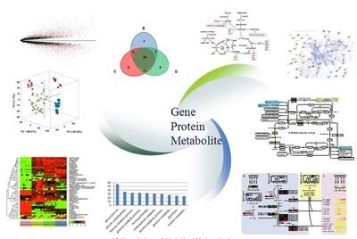 生物信息学服务