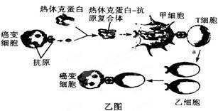 pCDNA3.1-3×FLAG-RBM4