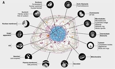 pVL1392载体昆虫细胞表达载体系统