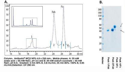 离子交换填料Sepharose Fast Flow(F.F.)