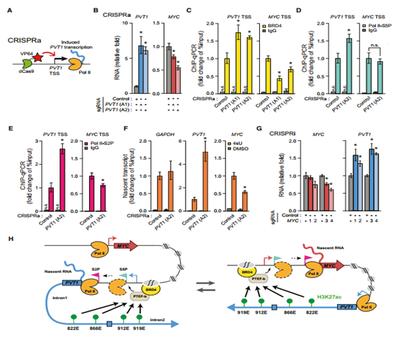 pNL3.3荧光蛋白表达系统