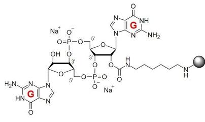 活化偶联介质Activated CH Sepharose 4B