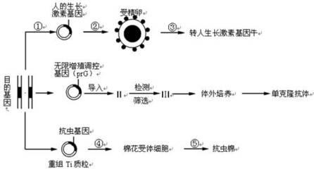 人滑膜细胞cDNA