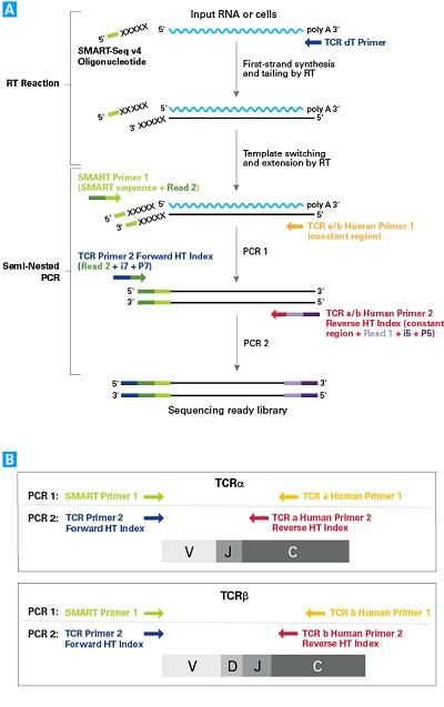 CLDND1; C3orf4; GENX-3745; MGC111162; MGC3316; MGC9861