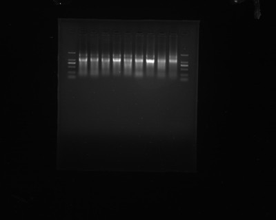 microRNA芯片
