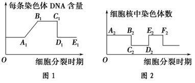上海伯豪隆重推出环状RNA芯片服务!