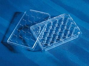 384孔细胞培养板