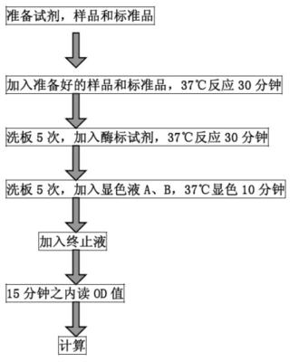 原核蛋白表达(构建/表达/纯化)