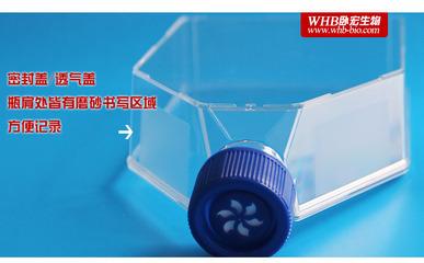 175cm2正方斜口滤膜培养瓶