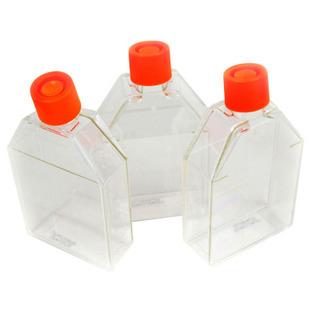 50ml,25c㎡ 悬浮细胞培养瓶,黄色透气盖,PS,无热源无菌