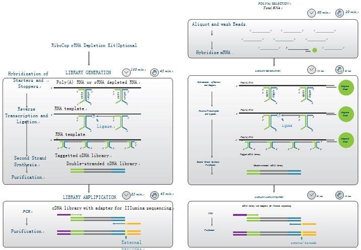 【正品直销,售后保障】(用于末端平滑化T4 DNA聚合酶)T4 DNA Polymerase