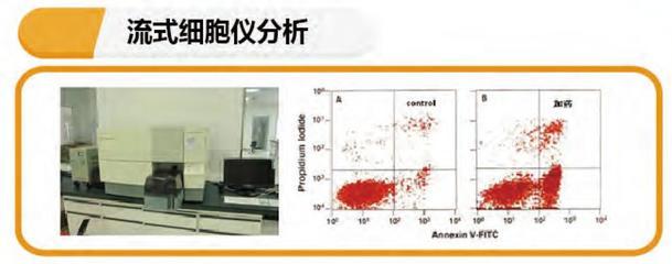 流式细胞技术服务