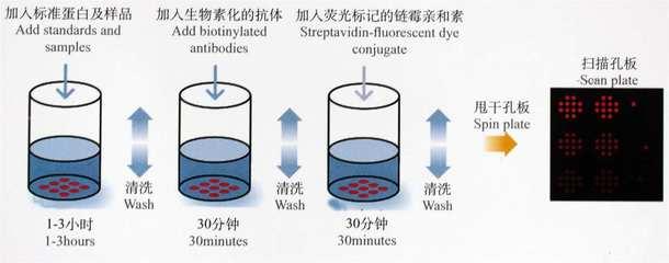 细胞活力检测