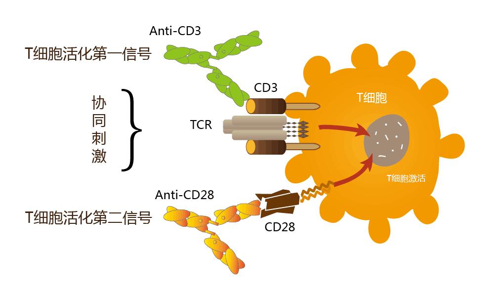 双荧光素酶报告基因检测试剂盒