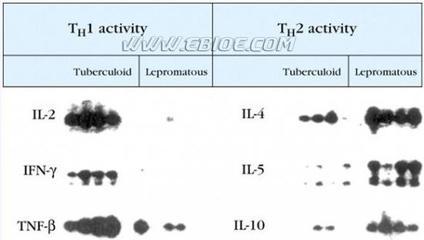 MessageMap? Northern Blot, Digestive System, Human