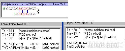 山羊抗小鼠IgG(H+L),碱性磷酸酶标记
