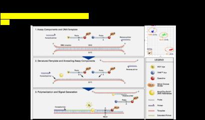 FLT3-ITD,D835Y突变多重PCR检测试剂盒