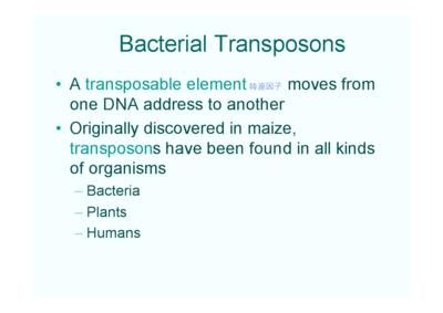预优化DNA转染试剂