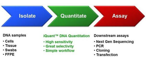 2×SYBR real-time PCR premixture