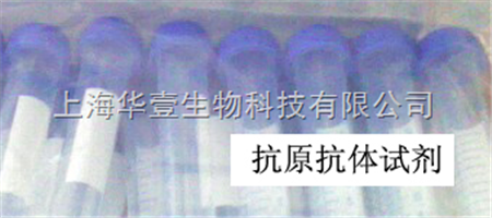 Anti-MHC class I/HLA-C抗体