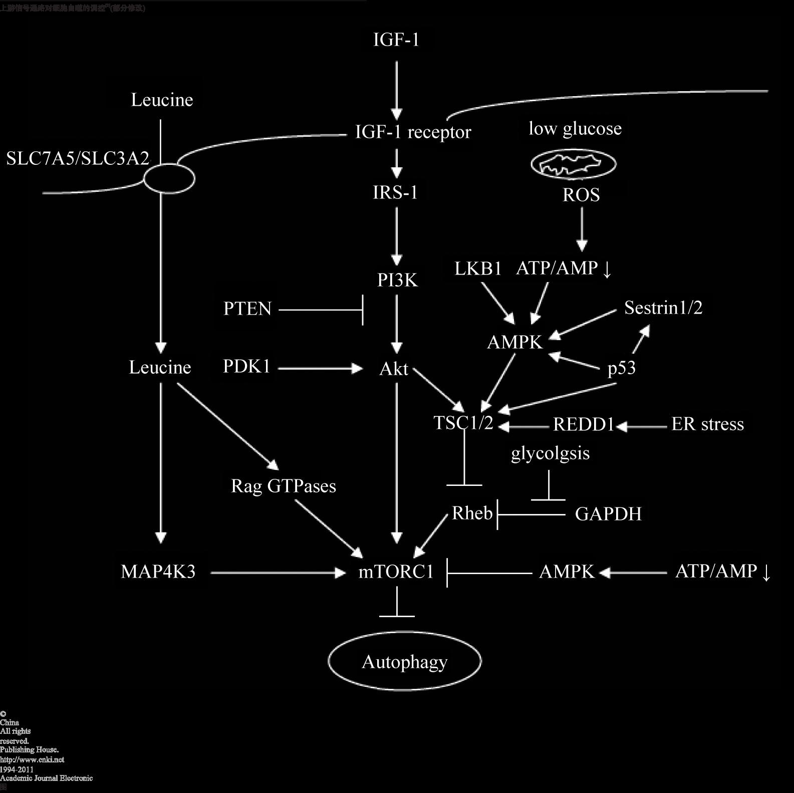 Anti-LEAP2抗体
