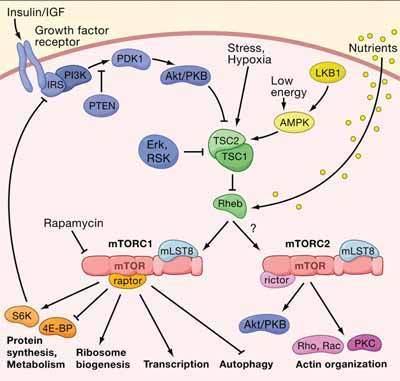 Anti-DDX41抗体