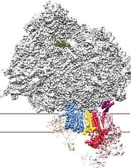 Anti-CLIC6抗体