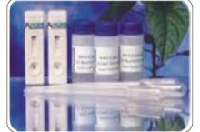 生物素分子纯化预装柱,5ML