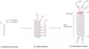 Anti-C3orf25抗体