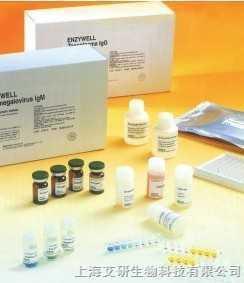 Anti-phospho-BAD (Ser91)抗体