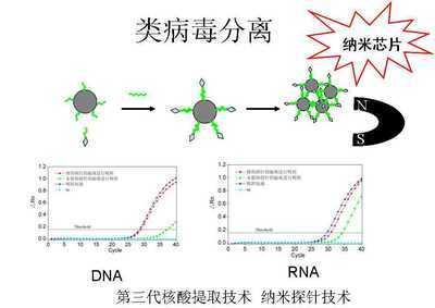 MagDNA磁珠普通植物DNA提取试剂盒