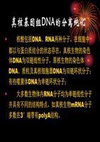 UNlQ-10 柱式酵母质粒 DNA 抽提试剂盒