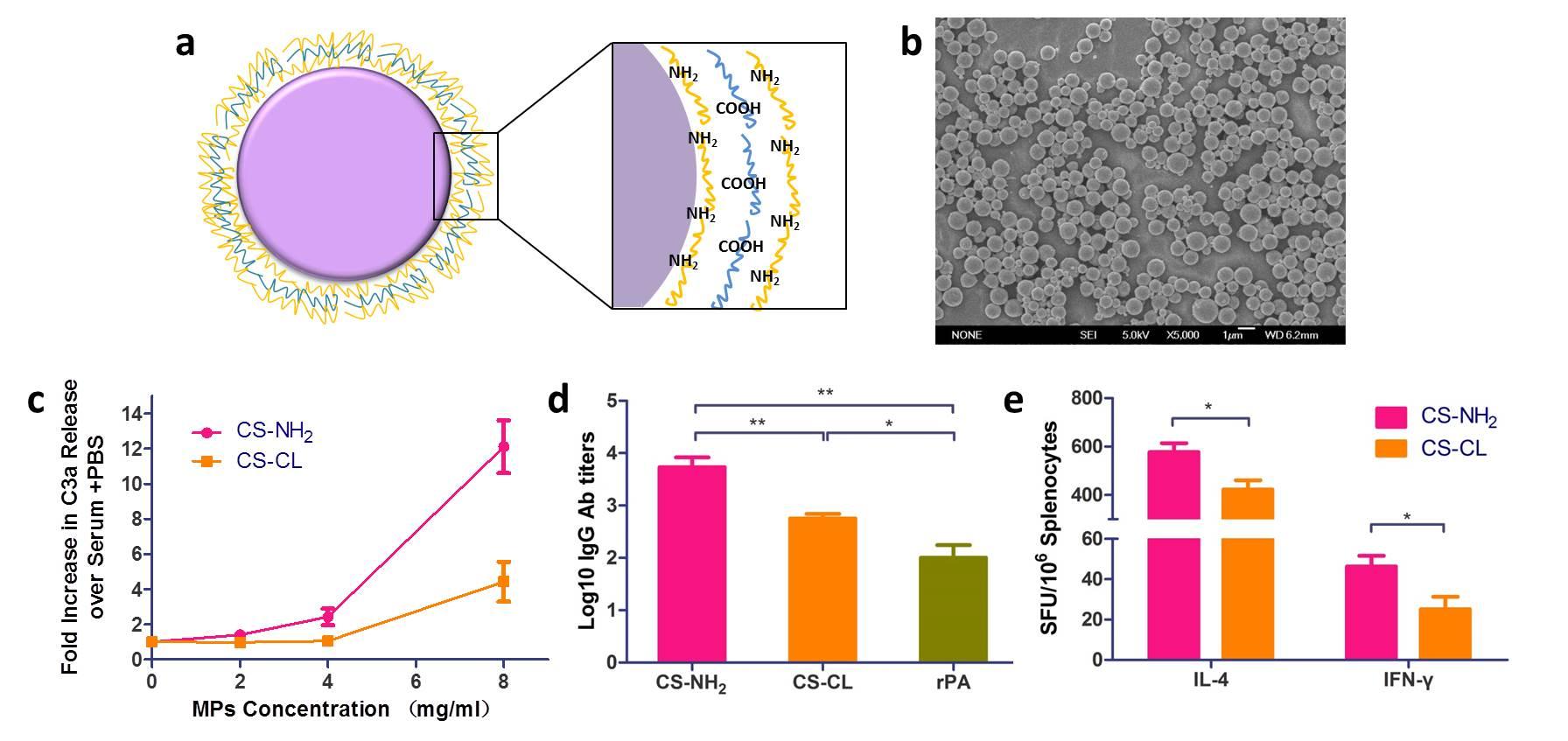C9orf163抗体,9号染色体开放阅读框163抗体