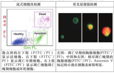大鼠凝血酶抗凝血酶复合物ELISAKit,大鼠(TAT)ELISA试剂盒