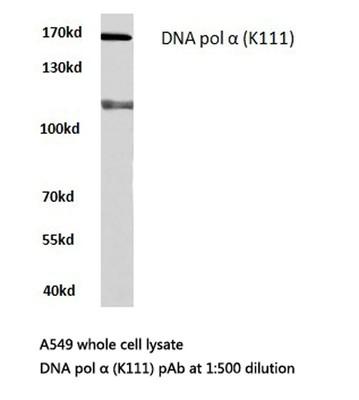 疾病相关标志物研究 如何发现与疾病相关的新型蛋白标志物