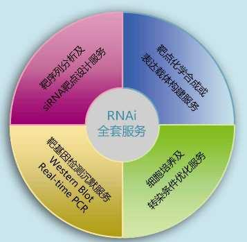 Rsk1/MAPKAP Kinase 1a SMARTpool? siRNA reagent(SiRNA试剂)