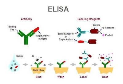 氨基化纳米上转红荧光微球