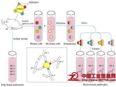 美国李线纹病毒 elisa/检测试剂