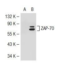 IPTG;异丙基-β-D-硫代半乳糖苷367-93-1